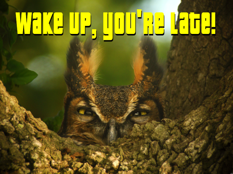 Wake Up, You Are Late!