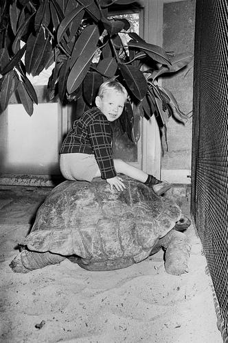 Artis, reuzenschildpad in reptielenhuis_3235967667_m