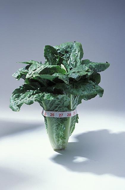 k11258-2----usda-salad-leafy-lettuce-vegetable-diet-fitness-nutrition