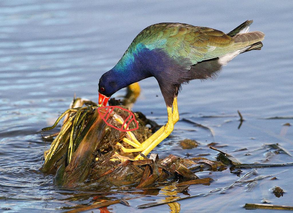 Courtesy US Fish and Wildlife Service via Flickr - CC 2.0