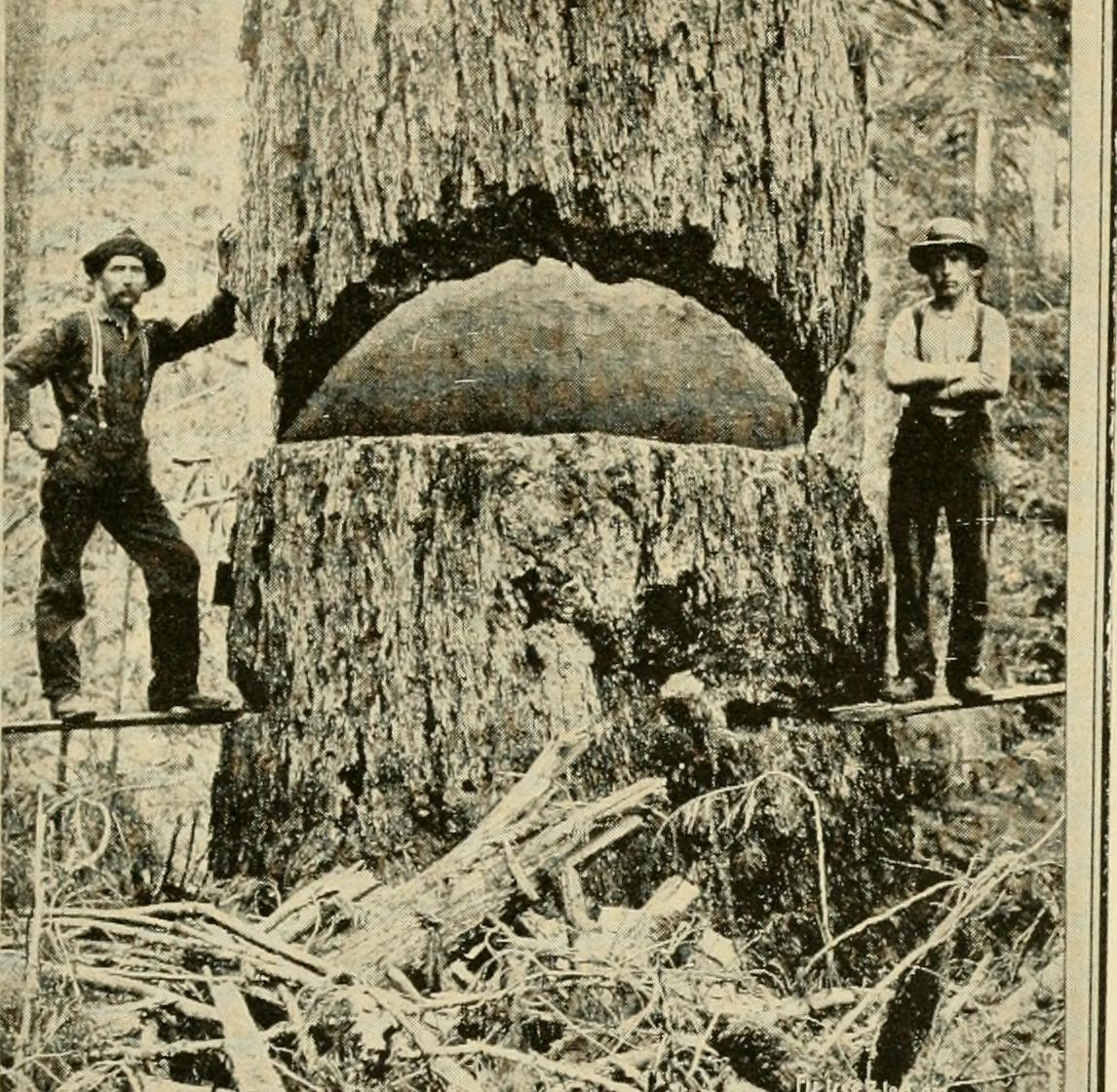 Image from page 26 of Seattle and the Orient (1900) 14782778584