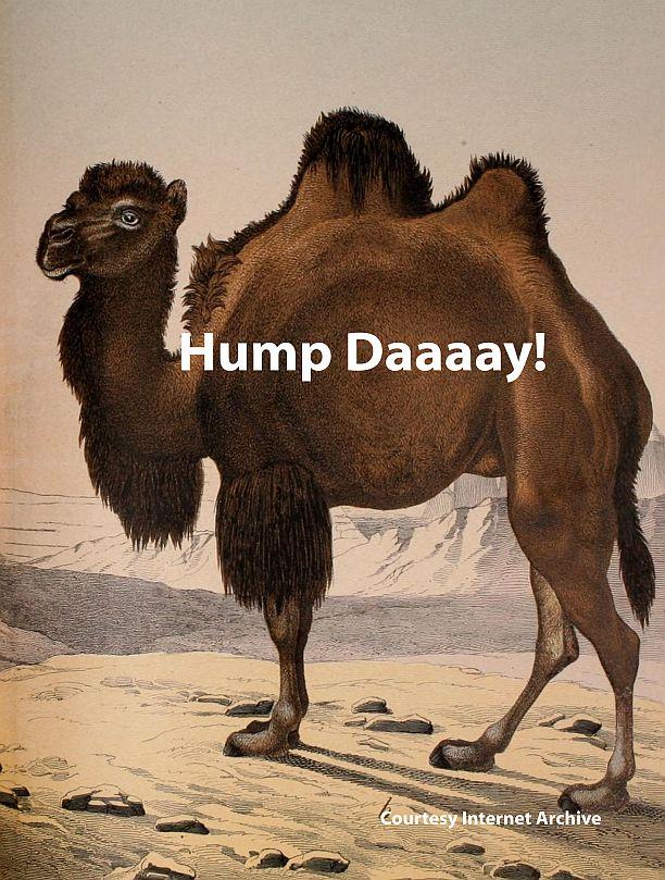 hump daaaayy! meme