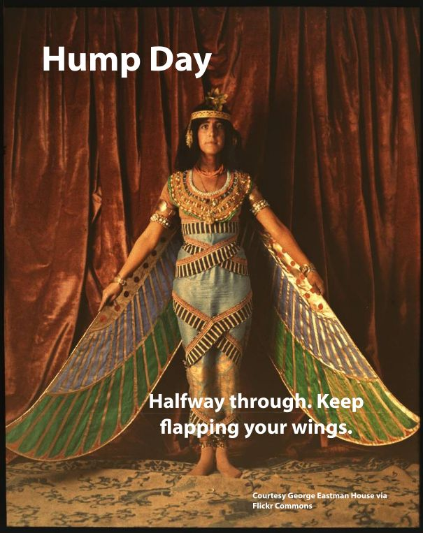 hump day keep flapping