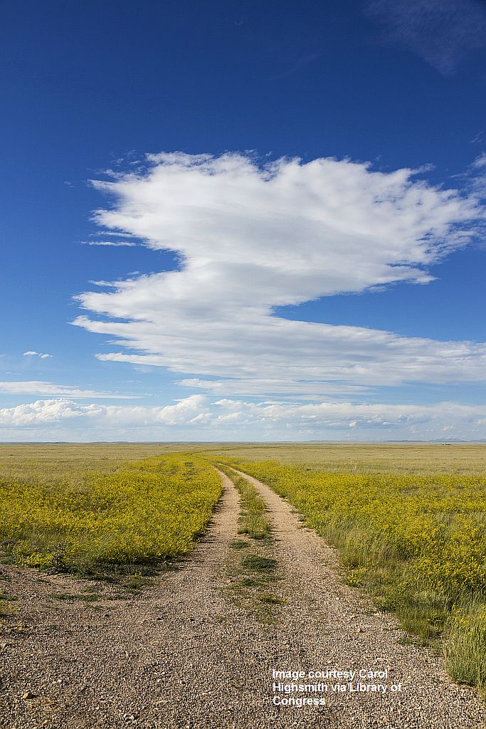 proc-001_A dirt road winds through a sea of high plains yellow sundrops on the Laramie Plain, a vast grasslan